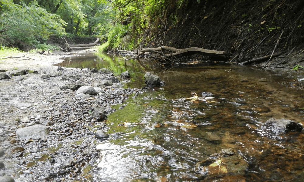 A stream flows in the woods.