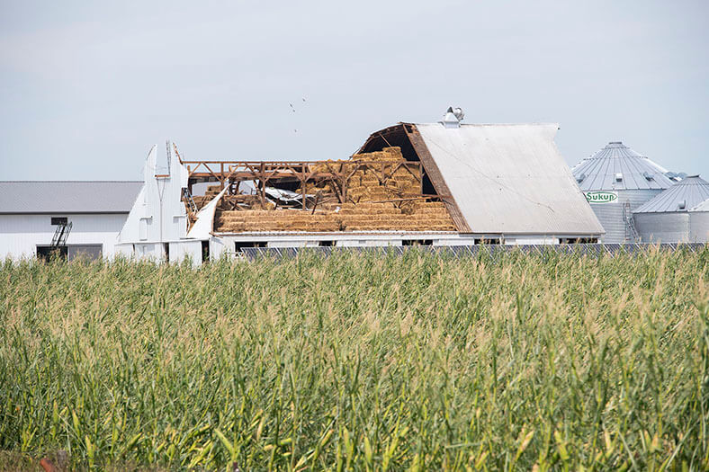 Storm-damaged barn sits near a cornfield.