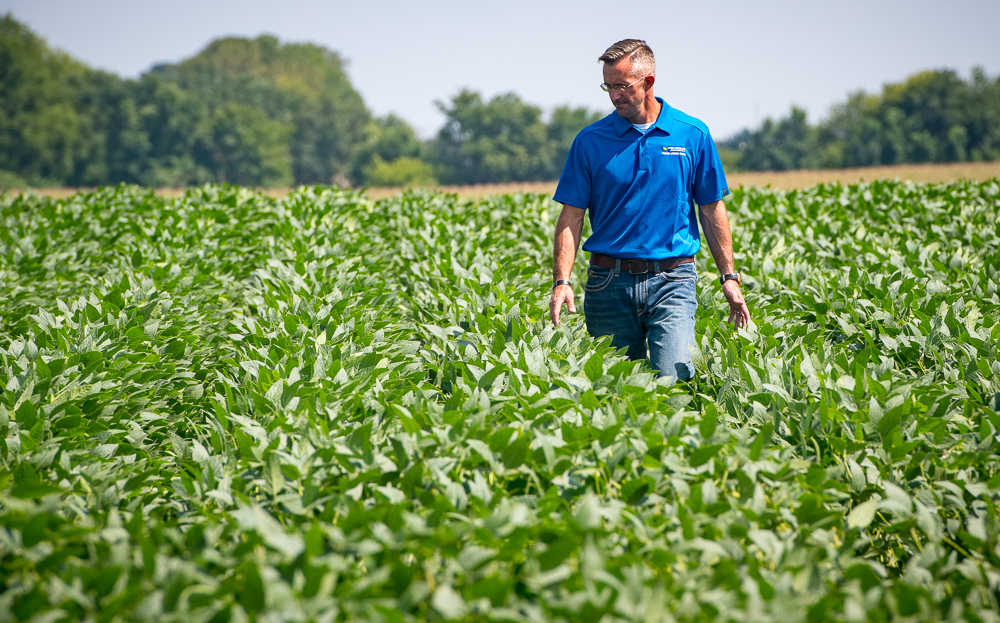 Brent Swart scouts a soybean field at his farm near Spe
