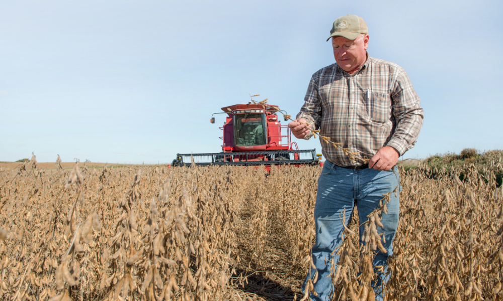 Bill Shipley stands in a soybean field during a past ha