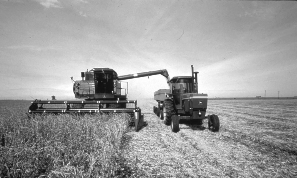 Black and white photo of harvest.