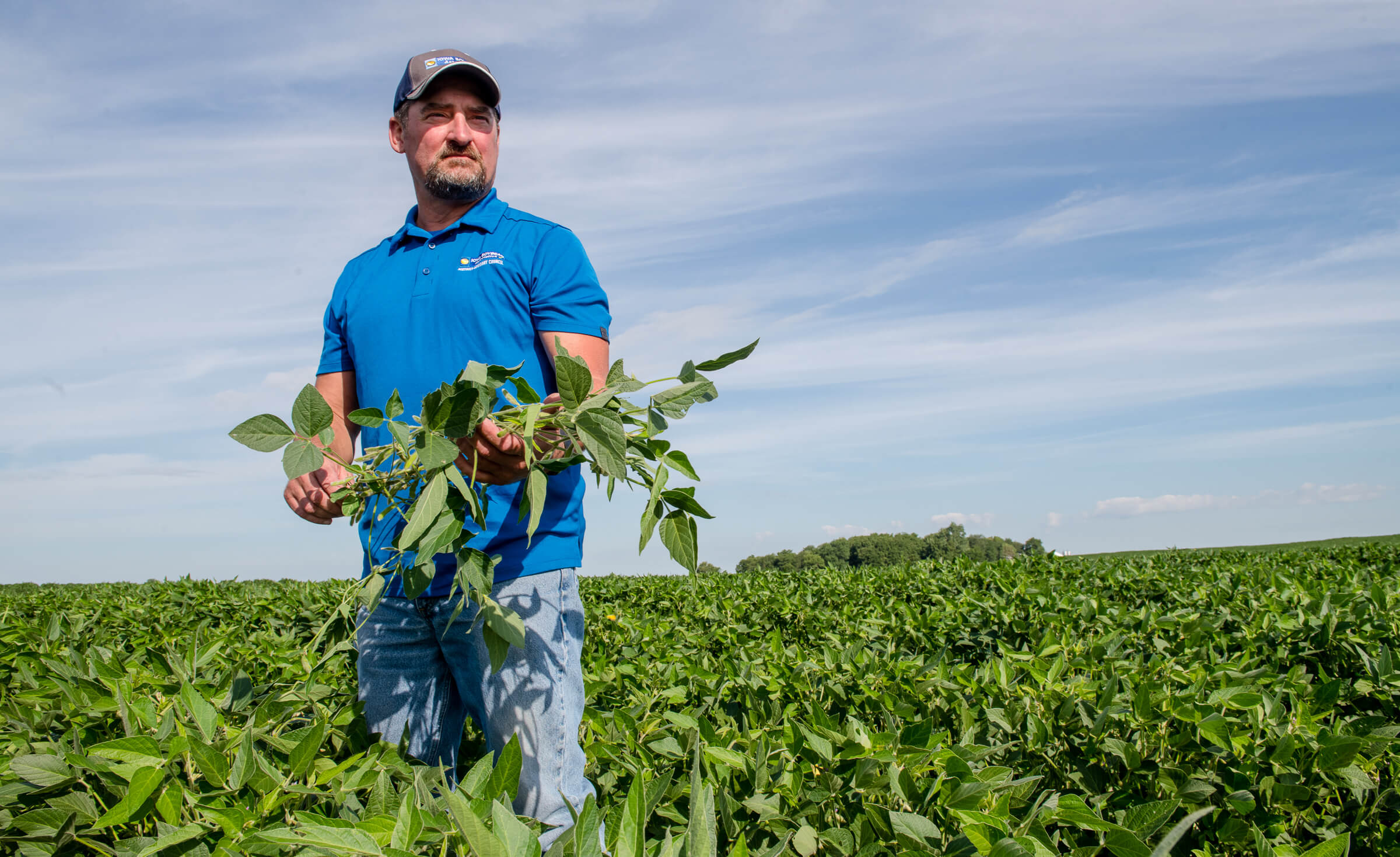 Tim Bardole in blue shirt holding soybean plants in a s