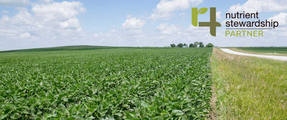Close-up of soybeans in a field.